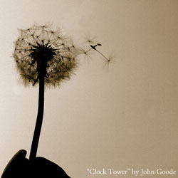 Photo of dandelion blowing seeds