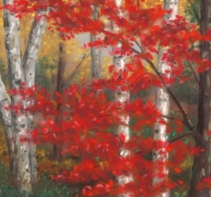 © 2016 Sheila Meixner, Red Maple